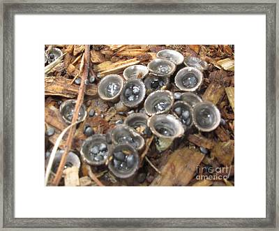 Grey Bird's Nest Fungus Framed Print