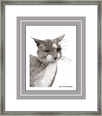 Grey Cat Number 12 Framed Print