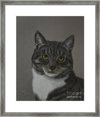 Grey Cat Framed Print by Veikko Suikkanen