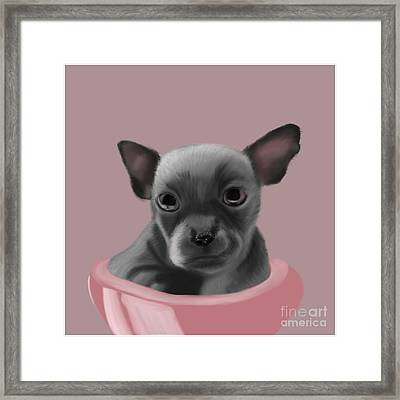 Grey Chihuahua In The Pink Framed Print
