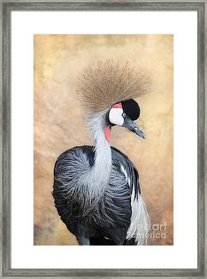Grey Crowned Crane Framed Print