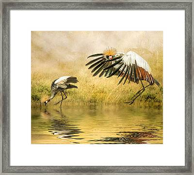 Framed Print featuring the photograph Grey Crowned Cranes by Brian Tarr