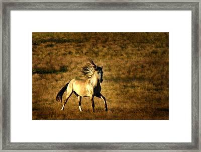 Grey Eagle Framed Print by Lourie Zipf