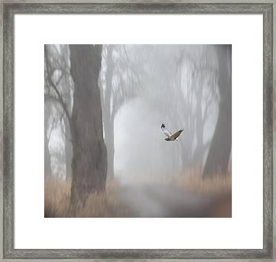 Grey Ghost Framed Print by Angie Vogel