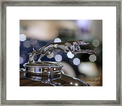 Grey Hound Hood Ornament Framed Print by JRP Photography