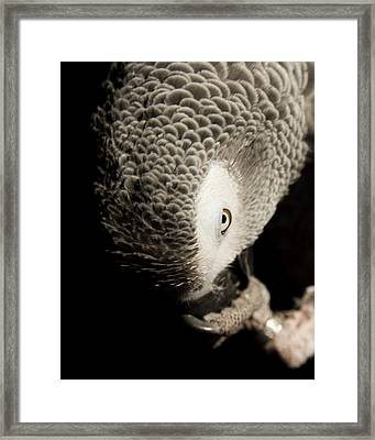 Grey Look Framed Print by Paulina Szajek
