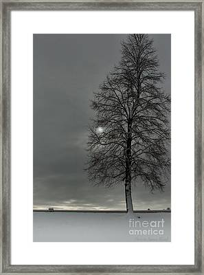 Framed Print featuring the photograph Grey Morning by Steven Reed
