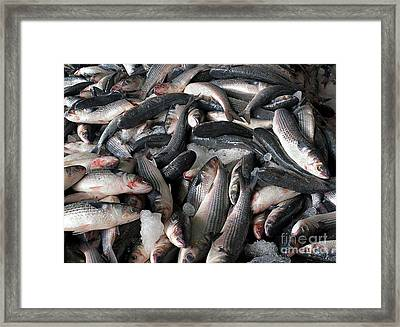 Grey Mullet Fish For Sale At A Fish Auction Framed Print by Yali Shi