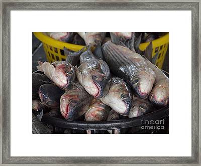 Grey Mullet Fish For Sale At The Fishmarket Framed Print by Yali Shi