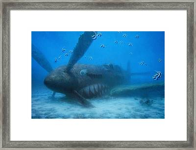 Grey Nurse Framed Print by Randall Scott