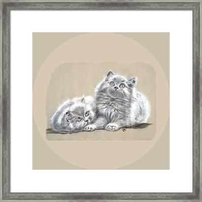 Grey Persian Kittens Framed Print by Jeanie Beline
