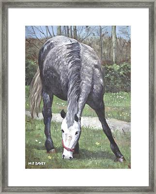 Grey Spotty Horse In Field Framed Print by Martin Davey