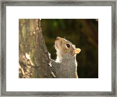 Framed Print featuring the digital art Grey Squirrel by Ron Harpham