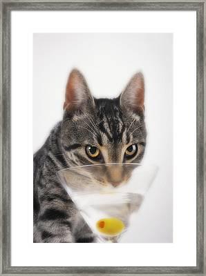 Grey Tabby Cat Drinking Framed Print