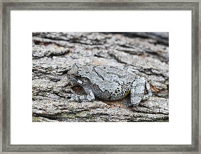 Framed Print featuring the photograph Cope's Gray Tree Frog by Judy Whitton