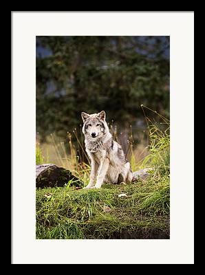 Captive Animals Framed Prints