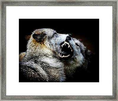 Grey Wolf Fight Framed Print by Steve McKinzie