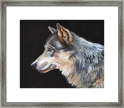 Grey Wolf Framed Print by J W Baker