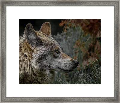 Grey Wolf Profile 3 Framed Print by Ernie Echols