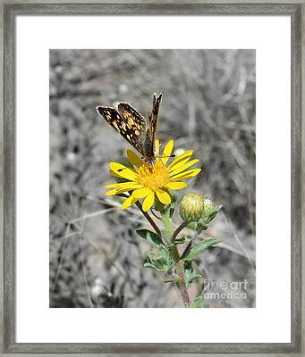Greyed Butterfly Framed Print