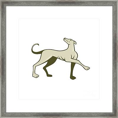 Greyhound Dog Marching Looking Up Cartoon Framed Print