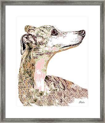Greyhound Earnest Framed Print