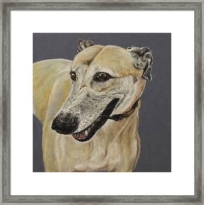 Greyhound Framed Print by Jeanne Fischer