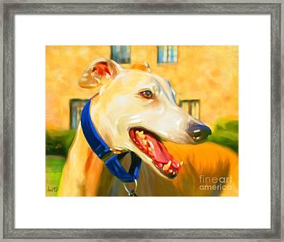 Greyhound Painting Framed Print by Iain McDonald