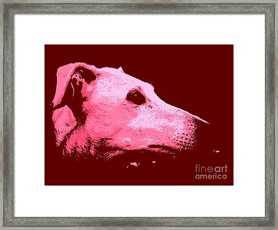 Framed Print featuring the photograph Greyhound Profile by Clare Bevan
