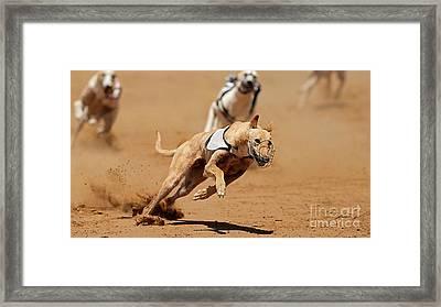 Greyhound Races Framed Print