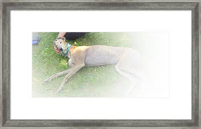 Greyhound Rescue 1 Framed Print