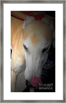 Greyhound Rescue 2 Framed Print