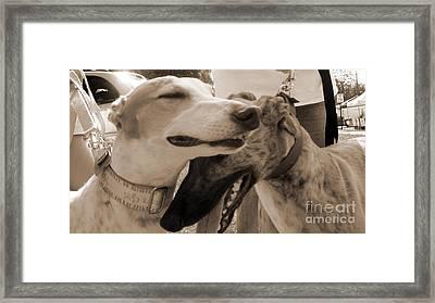 Greyhound Rescue 3 Framed Print