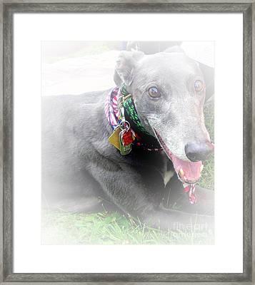 Greyhound Rescue 4 Framed Print