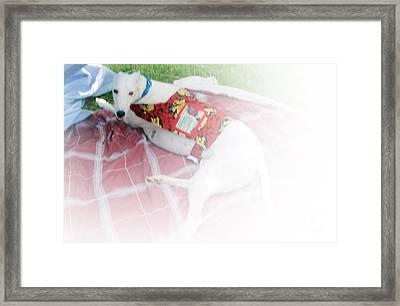 Greyhound Rescue 5 Framed Print by Jackie Bodnar