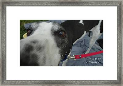 Greyhound Rescue 9 Framed Print