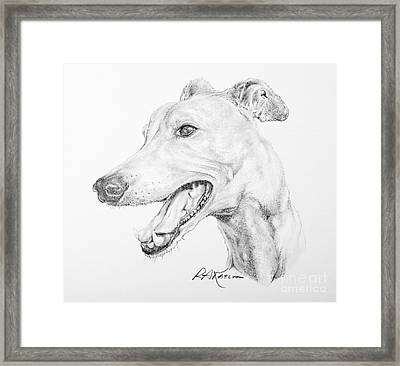 Greyhound Framed Print by Roy Anthony Kaelin