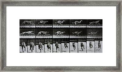 Greyhound Running Framed Print by Eadweard Muybridge