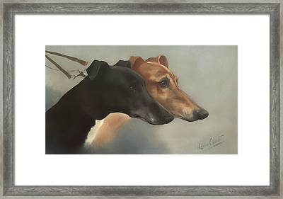 Greyhounds  Framed Print by Mountain Dreams