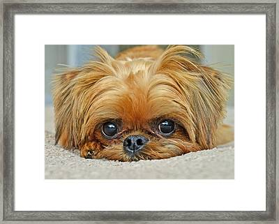 Framed Print featuring the photograph Griff by Lisa Phillips