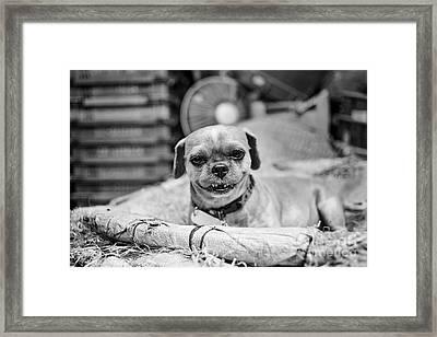 Griffon Smile Framed Print by Dean Harte