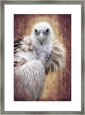 Griffon Vulture Framed Print by Barbara Orenya