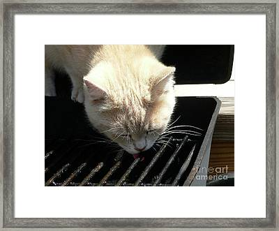 Grill Grate Gato Framed Print by Al Powell Photography USA