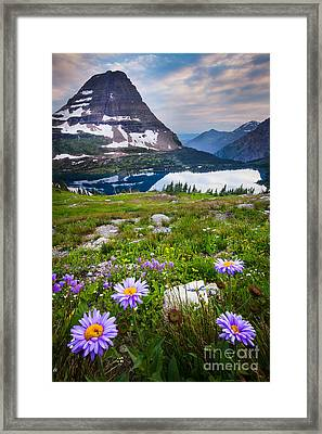 Hidden Lake Flowers Framed Print by Inge Johnsson