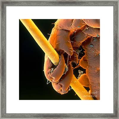 Grip Framed Print by Eye of Science