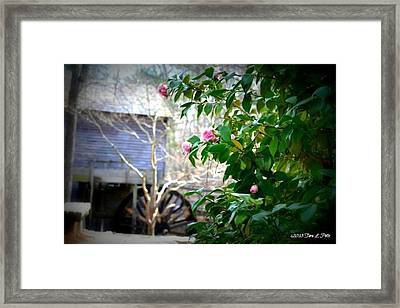 Framed Print featuring the photograph Grist Mill Roses by Tara Potts