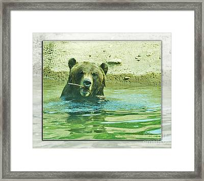 Grizzly Bath Framed Print by Walter Herrit