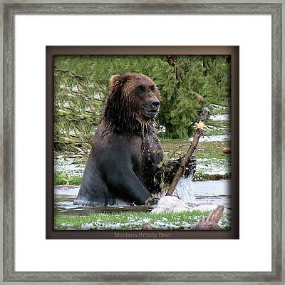 Grizzly Bear 08 Framed Print by Thomas Woolworth