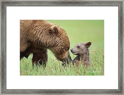Grizzly Bear And Cub In Katmai Framed Print by Yva Momatiuk John Eastcott