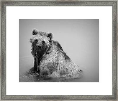 Grizzly Bear Bath Time Framed Print